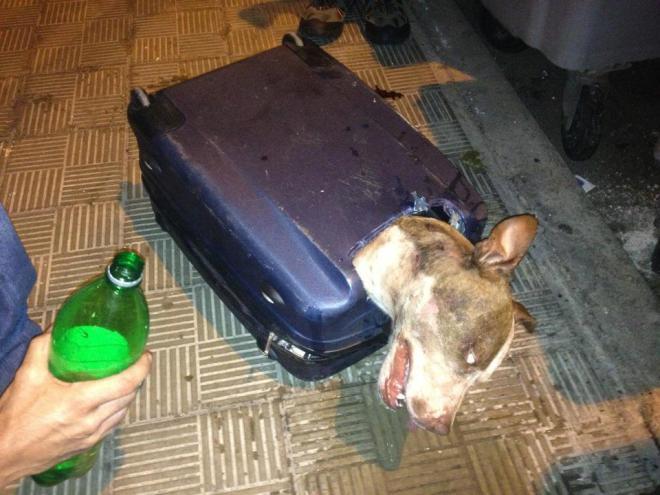 perra-abandonada-dentro-de-maleta
